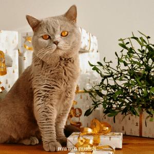 DIY Homemade Zero Waste Cat Litter